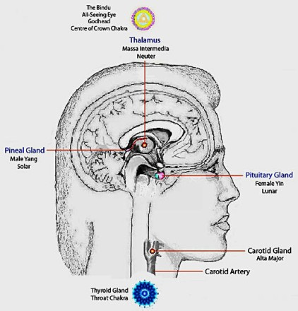 Full Moon Connection to God Partical, 13th Cranial Nerve
